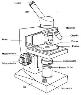 2 Prctica de laboratorioLA LUPA BINOCULAR Y EL MICROSCOPIO