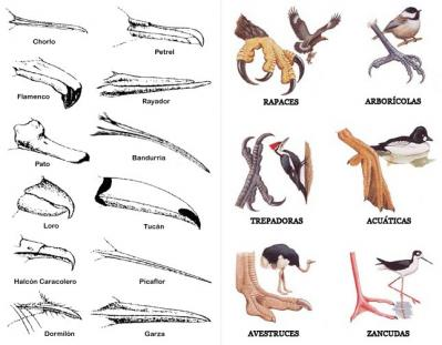 20101114100613-picos-y-patas.jpg